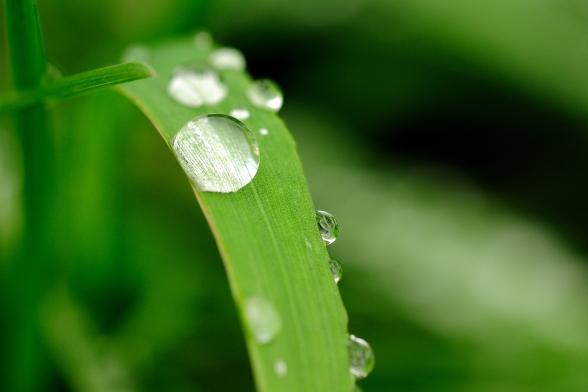 Droppe på grönt blad